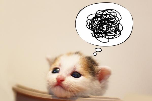 ぐるぐる思考 猫