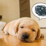 ストレスはリリース 犬