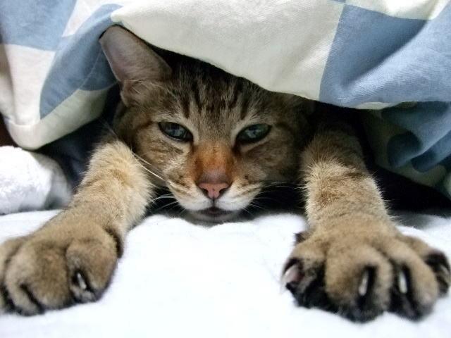 朝起きられない子 猫
