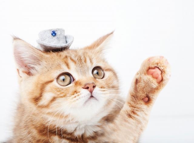 『どうすればいいの?』 猫